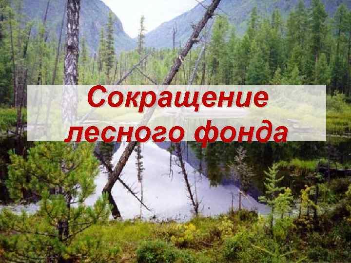 Сокращение лесного фонда