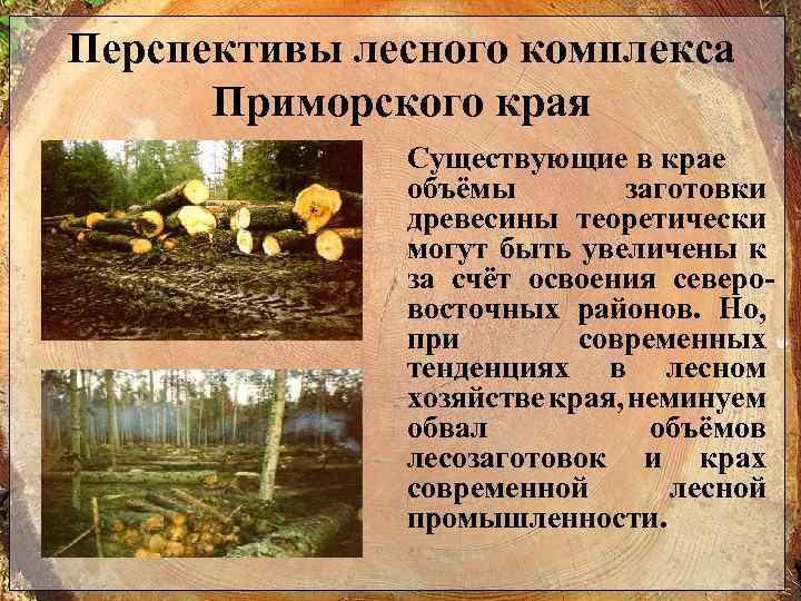 Перспективы лесного комплекса Приморского края Существующие в крае объёмы заготовки древесины теоретически могут быть