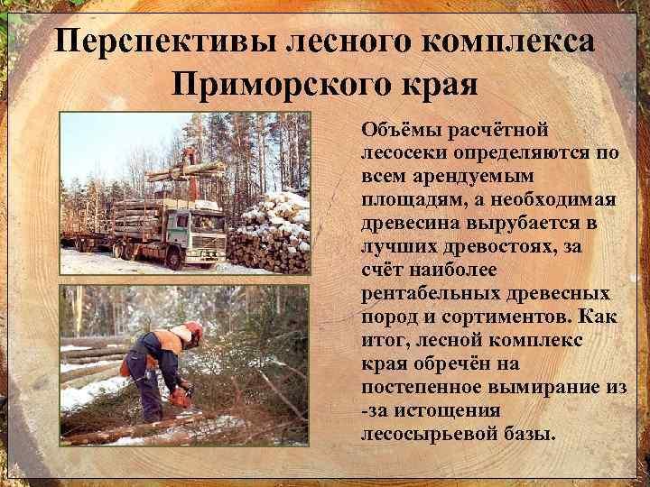 Перспективы лесного комплекса Приморского края Объёмы расчётной лесосеки определяются по всем арендуемым площадям, а