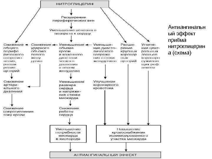 Антиангинальн ый эффект приёма нитроглицерин а (схема)