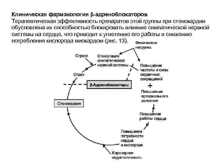 Клиническая фармакология β-адреноблокаторов Терапевтическая эффективность препаратов этой группы при стенокардии обусловлена их способностью блокировать