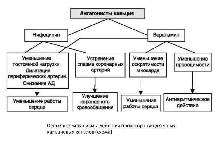 Основные механизмы действия блокаторов медленных кальциевых каналов (схема)
