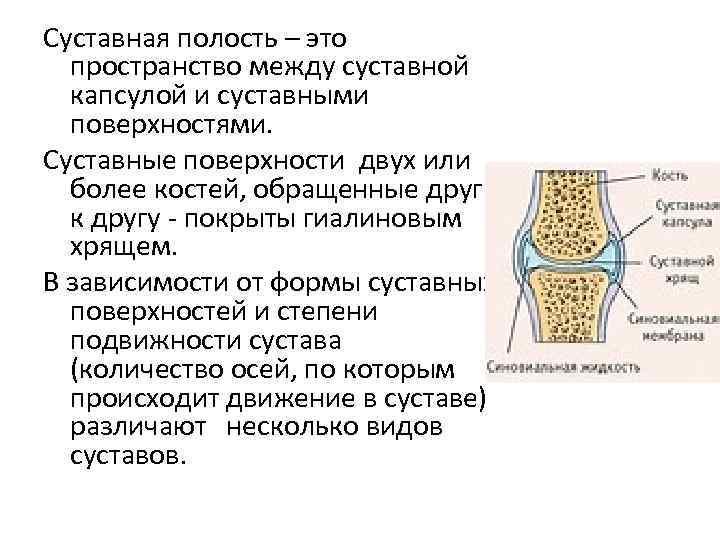 Суставная полость – это пространство между суставной капсулой и суставными поверхностями. Суставные поверхности двух