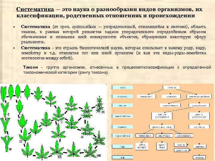 Систематика — это наука о разнообразии видов организмов, их классификации, родственных отношениях и происхождении