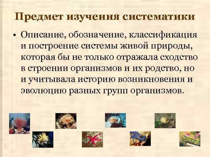 Предмет изучения систематики • Описание, обозначение, классификация и построение системы живой природы, которая бы