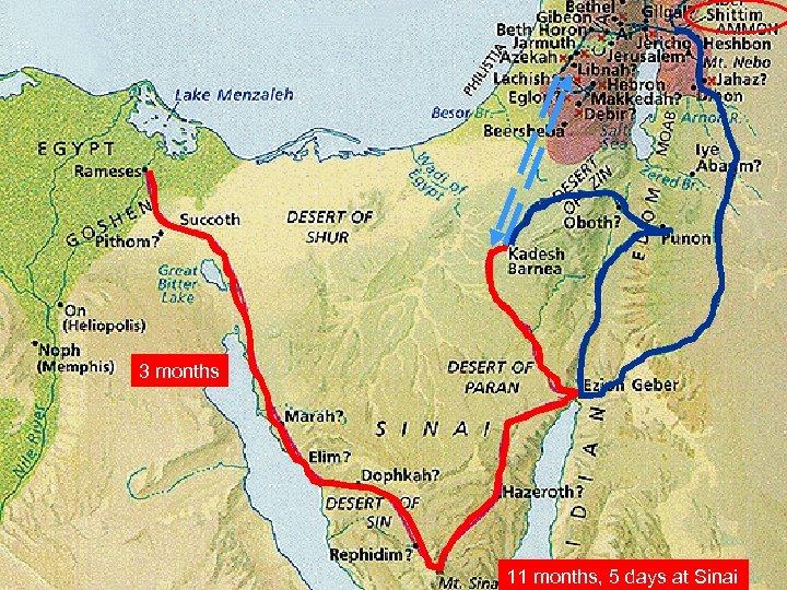 3 months 11 months, 5 days at Sinai
