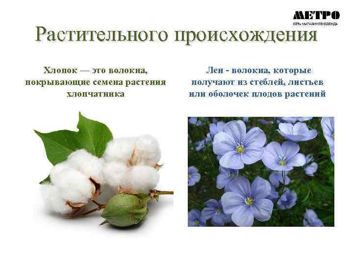 фотографии растений льна и хлопчатника понаблюдали казахстанскими