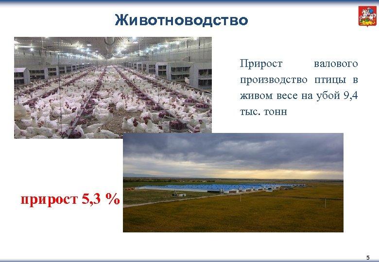 Животноводство Прирост валового производство птицы в живом весе на убой 9, 4 тыс. тонн