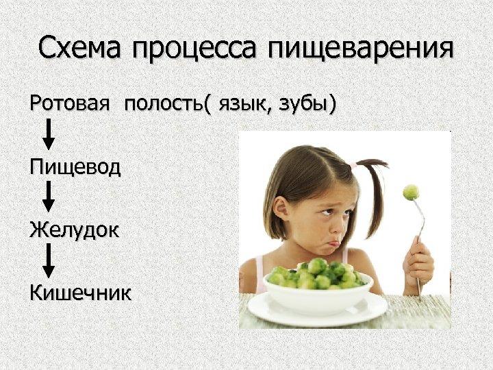 Схема процесса пищеварения Ротовая полость( язык, зубы) Пищевод Желудок Кишечник