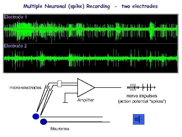 Multiple Neuronal (spike) Recording - two electrodes Electrode 1 Electrode 2 micro-electrodes Amplifier Neurones