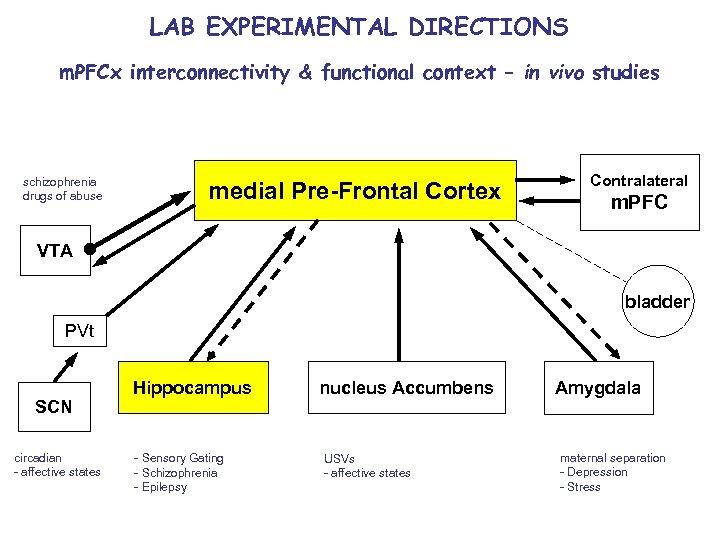 LAB EXPERIMENTAL DIRECTIONS m. PFCx interconnectivity & functional context – in vivo studies schizophrenia