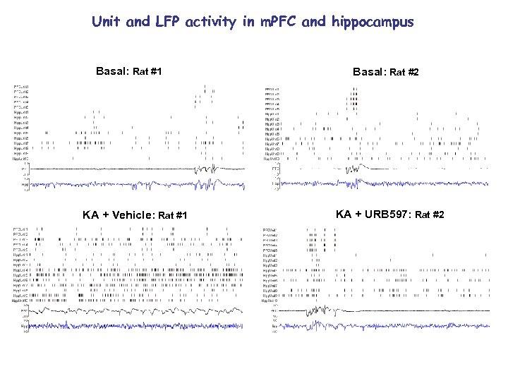Unit and LFP activity in m. PFC and hippocampus Basal: Rat #1 KA +