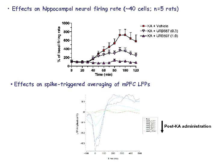 • Effects on hippocampal neural firing rate (~40 cells; n=5 rats) • Effects