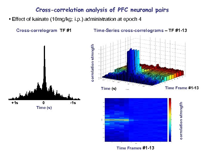 Cross-correlation analysis of PFC neuronal pairs • Effect of kainate (10 mg/kg; i. p.