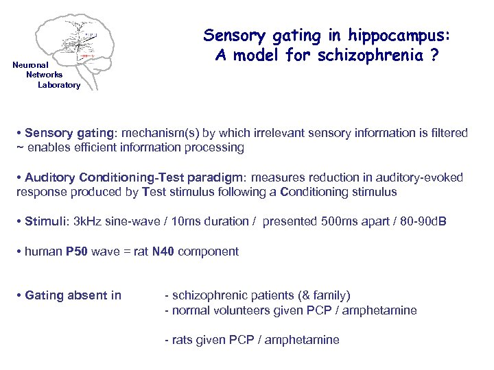 Neuronal Networks Laboratory Sensory gating in hippocampus: A model for schizophrenia ? • Sensory