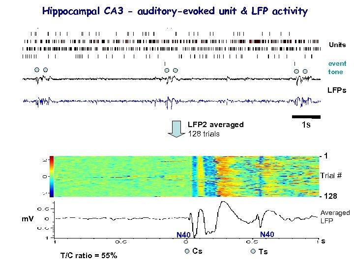 Hippocampal CA 3 - auditory-evoked unit & LFP activity Units event tone LFPs 1