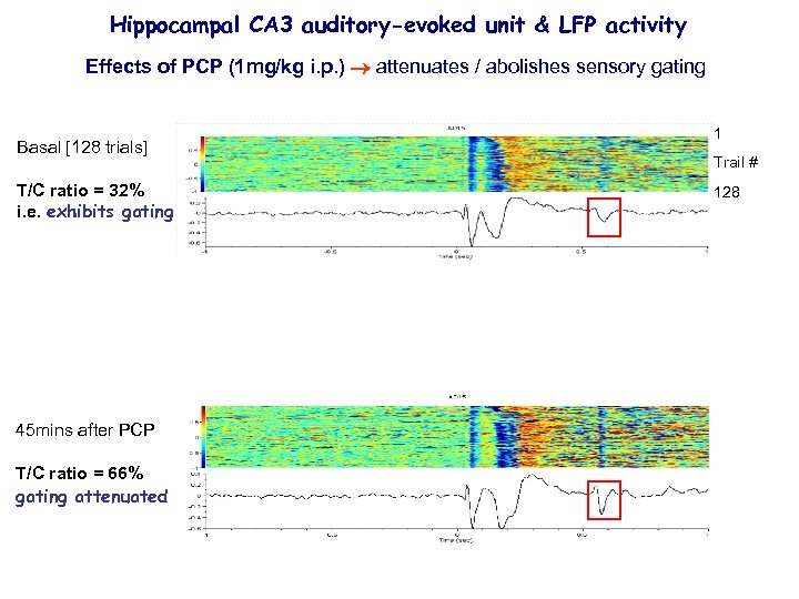 Hippocampal CA 3 auditory-evoked unit & LFP activity Effects of PCP (1 mg/kg i.