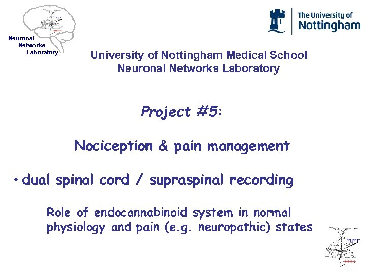 Neuronal Networks Laboratory University of Nottingham Medical School Neuronal Networks Laboratory Project #5: Nociception