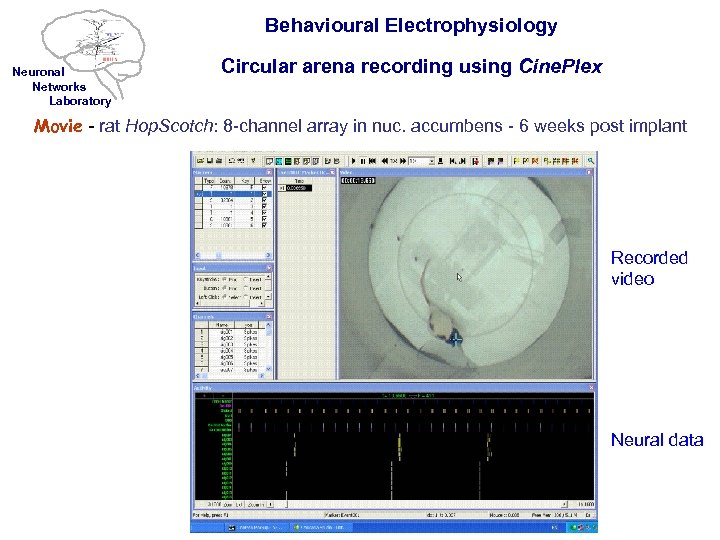 Behavioural Electrophysiology Neuronal Networks Laboratory Circular arena recording using Cine. Plex Movie - rat