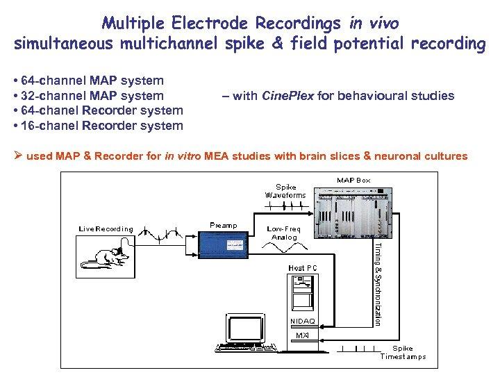 Multiple Electrode Recordings in vivo simultaneous multichannel spike & field potential recording • 64