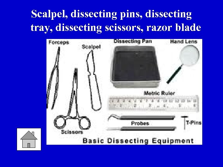 Scalpel, dissecting pins, dissecting tray, dissecting scissors, razor blade