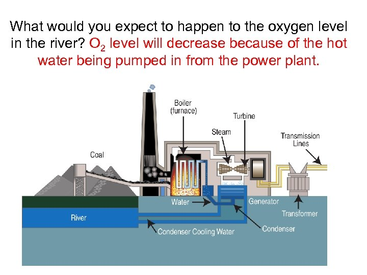 What would you expect to happen to the oxygen level in the river? O