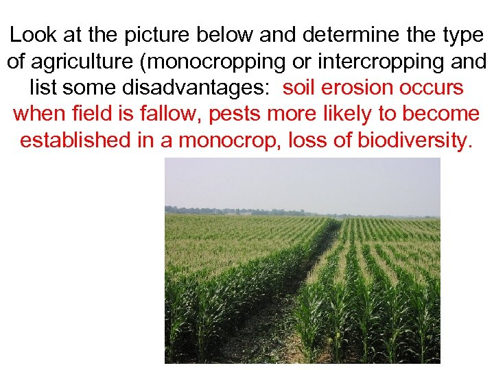 Look at the picture below and determine the type of agriculture (monocropping or intercropping