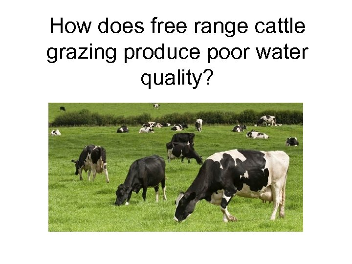 How does free range cattle grazing produce poor water quality?