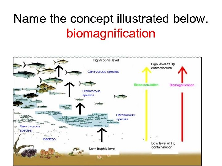 Name the concept illustrated below. biomagnification