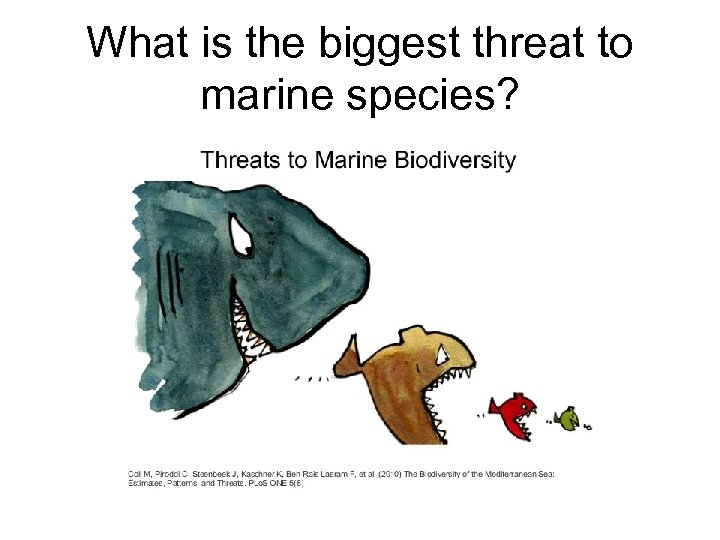 What is the biggest threat to marine species?
