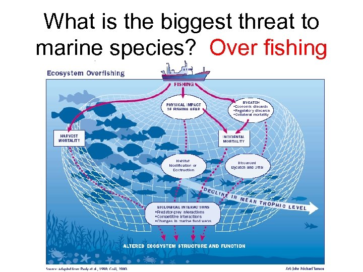 What is the biggest threat to marine species? Over fishing