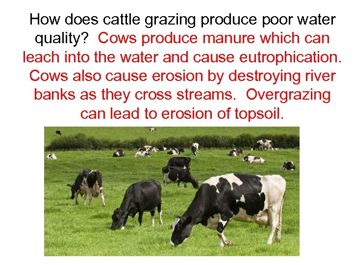 How does cattle grazing produce poor water quality? Cows produce manure which can leach