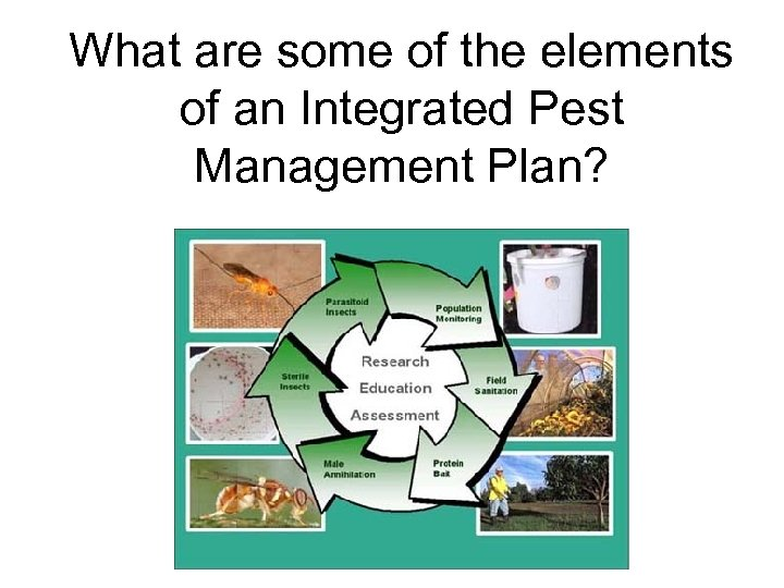 What are some of the elements of an Integrated Pest Management Plan?
