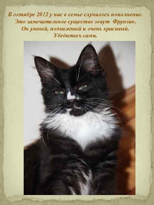 В октябре 2012 у нас в семье случилось пополнение. Это замечательное существо зовут Фрунзик.