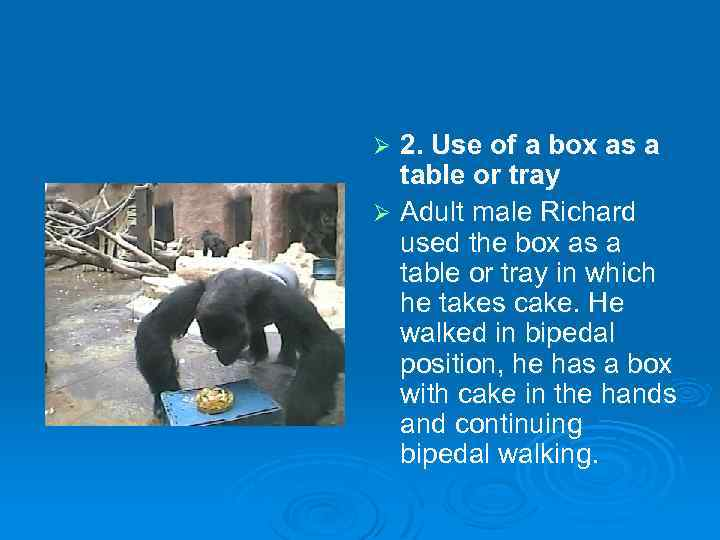 2. Use of a box as a table or tray Ø Adult male Richard