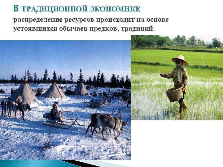 В ТРАДИЦИОННОЙ ЭКОНОМИКЕ распределение ресурсов происходит на основе устоявшихся обычаев предков, традиций.