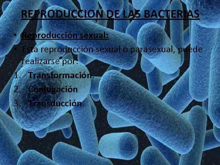 REPRODUCCION DE LAS BACTERIAS • Reproducción sexual: • Esta reproducción sexual o parasexual, puede