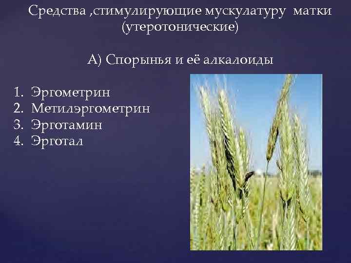 Средства , стимулирующие мускулатуру матки (утеротонические) А) Спорынья и её алкалоиды 1. 2. 3.