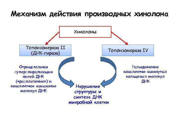 Механизм действия производных хинолона Хинолоны Топоизомераза II (ДНК-гираза) Отрицательная суперспирализация нитей ДНК ( «расплетение»