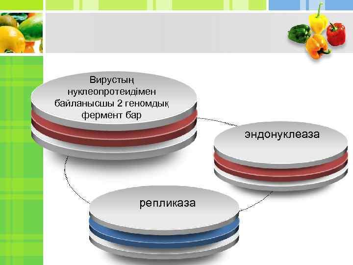 Вирустың нуклеопротеидімен байланысшы 2 геномдық фермент бар эндонуклеаза репликаза