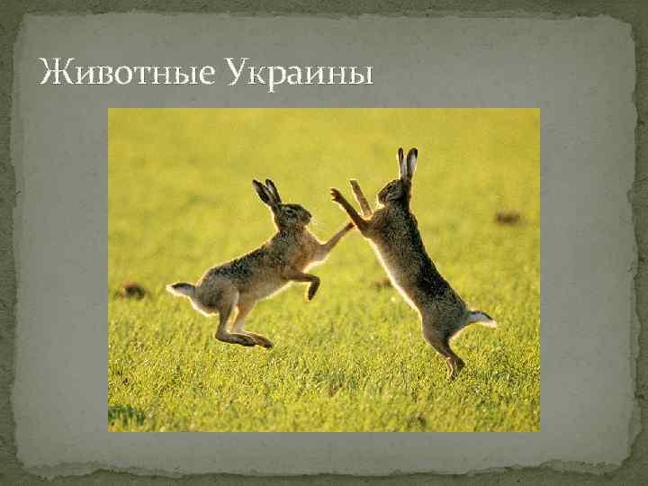 Животные Украины