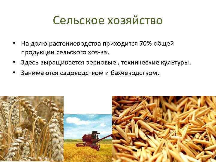 Сельское хозяйство • На долю растениеводства приходится 70% общей продукции сельского хоз-ва. • Здесь