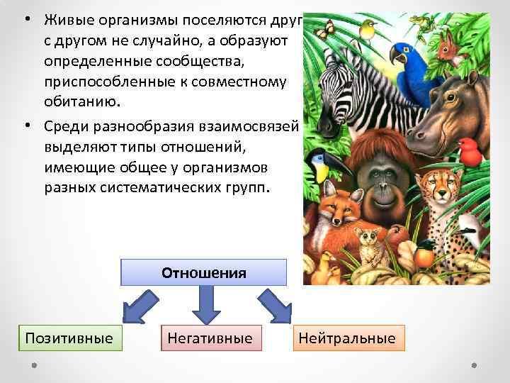 • Живые организмы поселяются друг с другом не случайно, а образуют определенные сообщества,