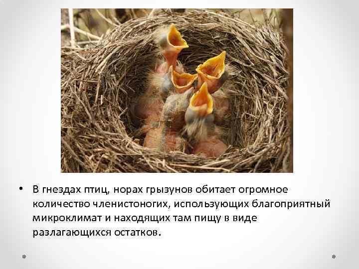 • В гнездах птиц, норах грызунов обитает огромное количество членистоногих, использующих благоприятный микроклимат