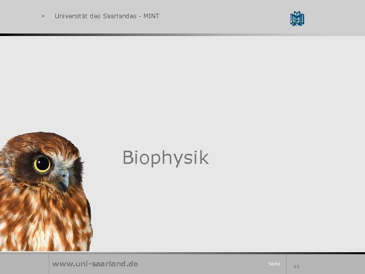 > Universität des Saarlandes - MINT Biophysik www. uni-saarland. de Seite 49