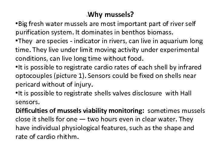 Why mussels? l • Big fresh water mussels are most important part of river