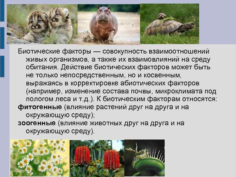 Биотические факторы — совокупность взаимоотношений живых организмов, а также их взаимовлияний на среду обитания.