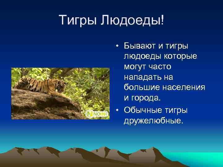 Тигры Людоеды! • Бывают и тигры людоеды которые могут часто нападать на большие населения