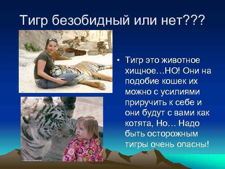 Тигр безобидный или нет? ? ? • Тигр это животное хищное…НО! Они на подобие