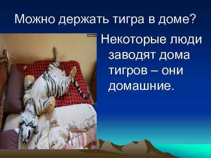 Можно держать тигра в доме? Некоторые люди заводят дома тигров – они домашние.